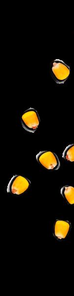 kernels-06