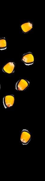 kernels-left-01