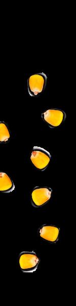 kernels-left-03
