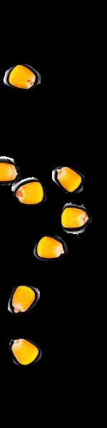 kernels-left-04