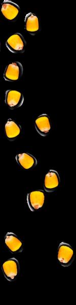kernels-top2-01